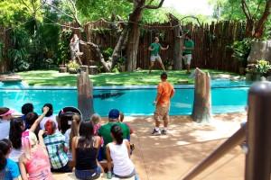 Dallas Zoo stage (1)